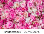 Stock photo soft pink color roses background 307432076