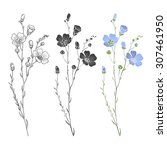 Flax Plant With Flowers And...