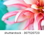 abstract macro photo of a... | Shutterstock . vector #307520723
