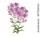 Phlox Flowers Watercolor...