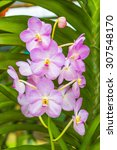 Small photo of Close up shot pink vanda with nature background