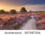 a path through endless hills... | Shutterstock . vector #307587356