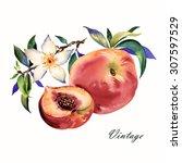 watercolor illustration of... | Shutterstock . vector #307597529