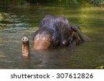 Young Indian Elephant Bathing....