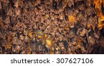 colony of bats  hanging from... | Shutterstock . vector #307627106