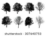 set of eight trees silhouette... | Shutterstock . vector #307640753