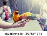 parrot on woman hand in park in ... | Shutterstock . vector #307694378