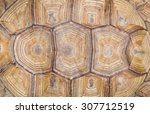 Stock photo turtle s back background texture 307712519