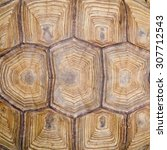 Stock photo turtle s back background texture 307712543