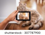 Stock photo tablet in hand photo shooting a house cat these are all photos made by me that you separately 307787900