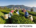 women from thailand breaks tea... | Shutterstock . vector #307920896