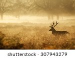 silhouette of a red deer stag... | Shutterstock . vector #307943279
