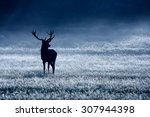 Red Deer Stag In The Blue...