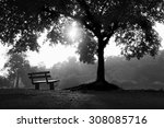Bench And Tree Shadows In The...