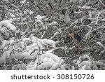 Black Crowned Night Heron...
