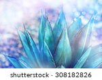 agave montana  the pointy end... | Shutterstock . vector #308182826