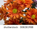 close up of the orange... | Shutterstock . vector #308281988