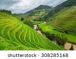Green Rice Fields On Terraced...