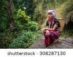 chiang mai  thailand   jul 25   ... | Shutterstock . vector #308287130