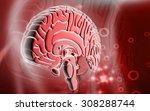 digital illustration of  brain... | Shutterstock . vector #308288744