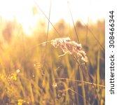 grass abstract background ... | Shutterstock . vector #308466344