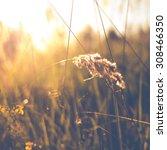 grass abstract background ... | Shutterstock . vector #308466350