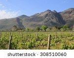 Vineyard And Mountain Near...