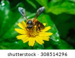 insects   macro insect   insect ... | Shutterstock . vector #308514296