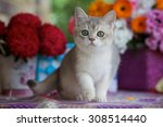 Stock photo a young kitten with green eyes near the bright bouquet of flowers 308514440