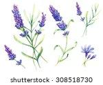 romantic vintage romantic set... | Shutterstock . vector #308518730