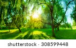 panorama of green summer park.... | Shutterstock . vector #308599448