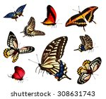 Stock photo many different butterflies isolated on white background 308631743