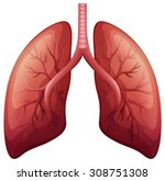 lung cancer diagram in detail... | Shutterstock .eps vector #308751308