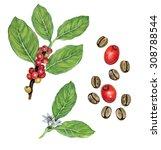 realistic illustration of... | Shutterstock . vector #308788544
