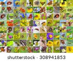 insects. a collage of photos of ... | Shutterstock . vector #308941853
