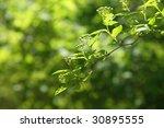 green sheet on a blured...   Shutterstock . vector #30895555