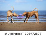 Stock photo two dogs playing on the beach 308972879