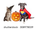 Stock photo cute cat dressed as a witch and dog wearing super hero costume for halloween with a jack o lantern 308978039