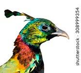 isolated himalayan monal.... | Shutterstock .eps vector #308999354