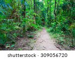 tropical forest hiking path... | Shutterstock . vector #309056720