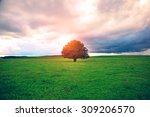 single oak tree in field under... | Shutterstock . vector #309206570