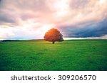 Single Oak Tree In Field Under...