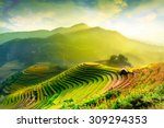 Rice Fields On Terraced Of Mu...