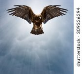 eagle with spread wings in the...   Shutterstock . vector #309326294
