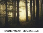 sunset at the edge of forest in ... | Shutterstock . vector #309358268
