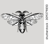 insect bee. vector black and... | Shutterstock .eps vector #309379850