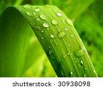 Gentile Leaf. Element Of Design.