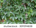 wall overgrown with greenery | Shutterstock . vector #309394838