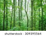 trees in forest | Shutterstock . vector #309395564