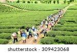 crowd of tea picker picking tea ... | Shutterstock . vector #309423068